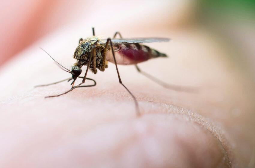 ارتباط بین کاهش جمعیت حشرات و آلودگی نوری